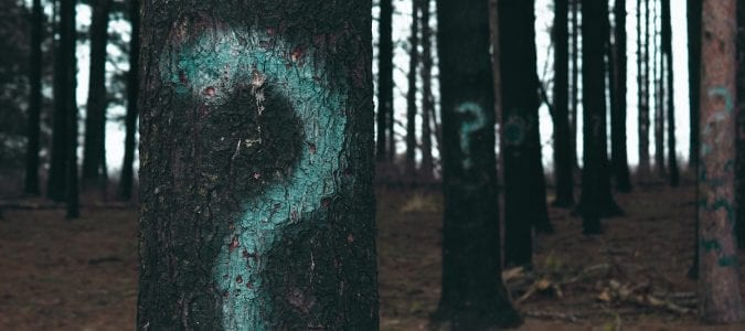 Why write a non-fiction book symbolized by trees with question marks